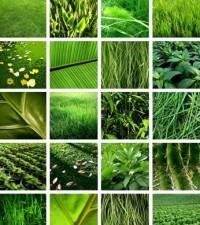 La página del medio ambiente