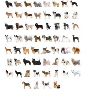 razas perro