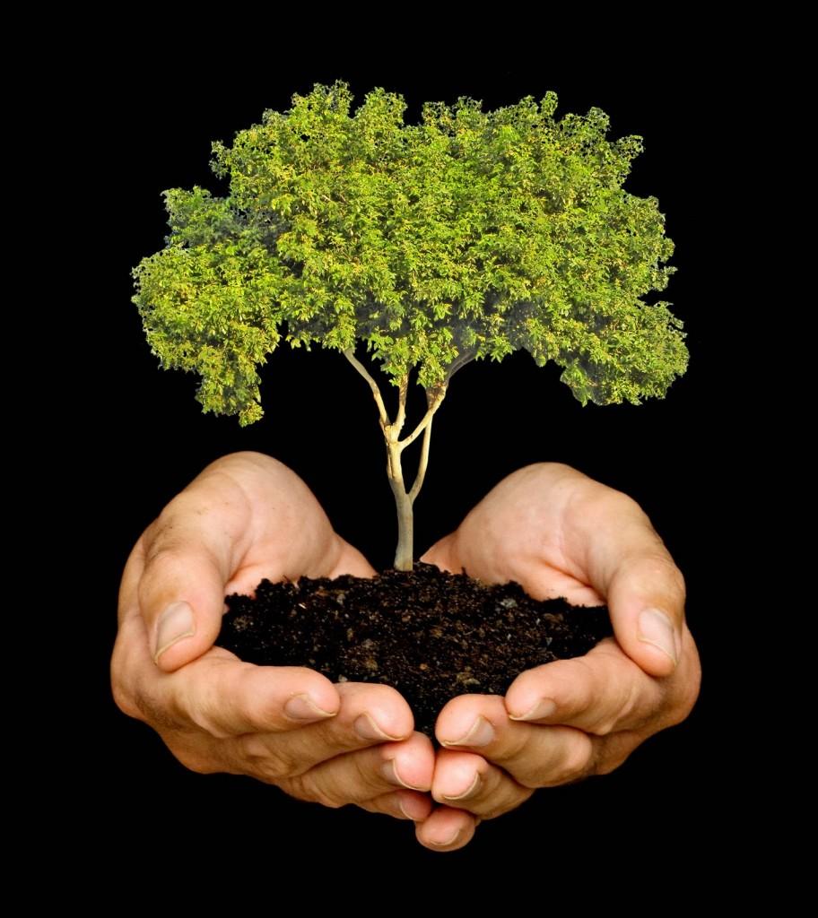 Cómo plantar árboles y arbustos